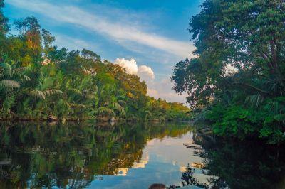 Kinabatangan River DSC00711.jpg