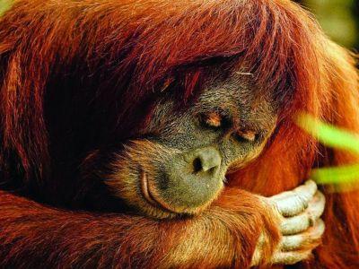 Borneo_Outdoor_Discovery.jpg