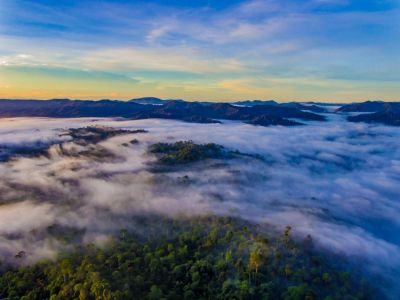 Danum Valley_DJI_0216.jpg