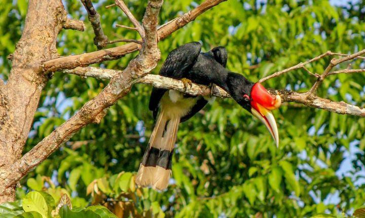 Sarawak_IMG_9386.jpg