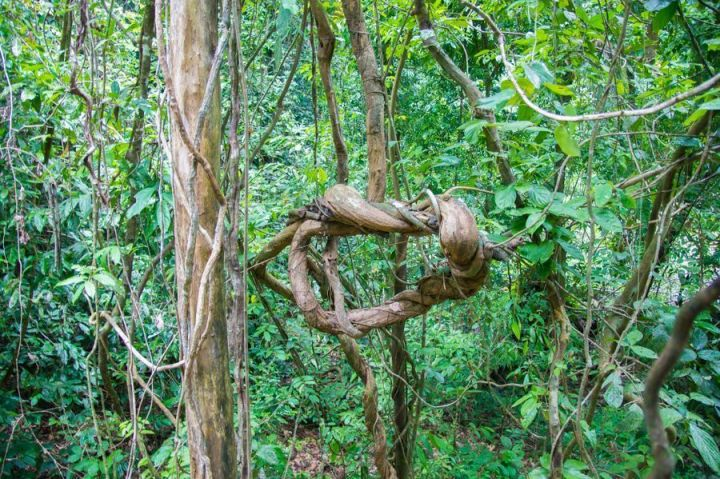 Tabin Wildlife Reserve_DSC08988.jpg